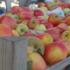 Fruitpersdag 12 oktober a.s.
